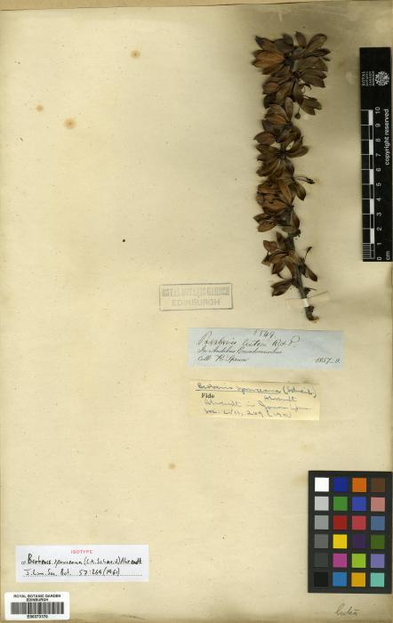 Berberidaceae image