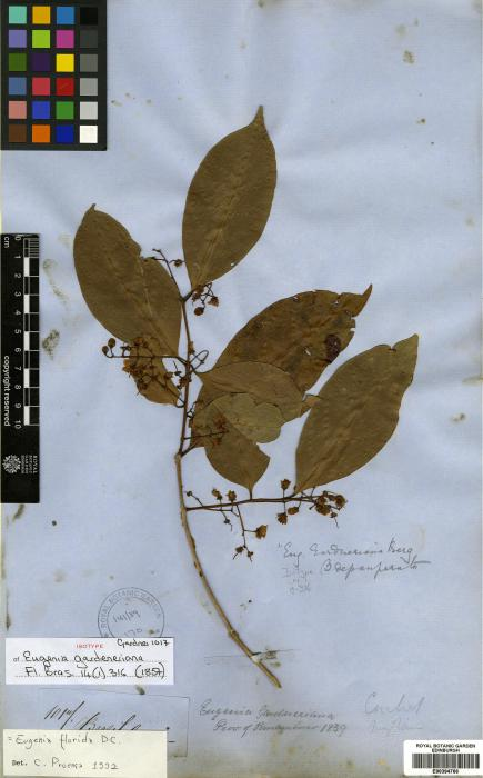 Eugenia florida image