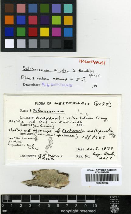 Sclerococcum simplex image